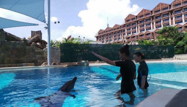 sarah & dolphins